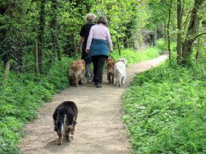 Dog_Walking_at_Tringford_Reservoir